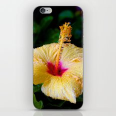 Wet Hibiscus version 2 iPhone & iPod Skin