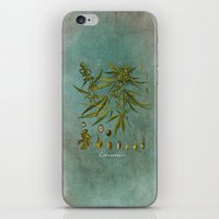 cannabis iPhone & iPod Skins featuring Cannabis by jbjart