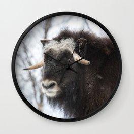 Musk ox portrait Wall Clock