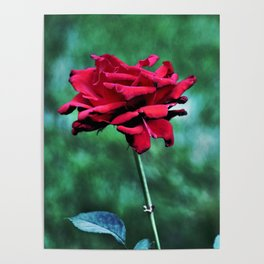 Withered Beauty (ROSE) Poster