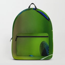 Damselfly. Backpack