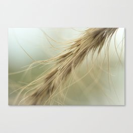 Whispy Tan Grass Canvas Print