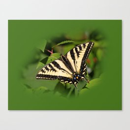 Western Tiger Swallowtail in the Garden Canvas Print