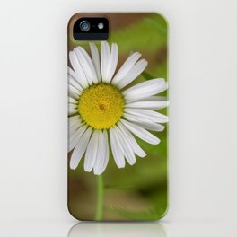 Daisy Among Ferns iPhone Case