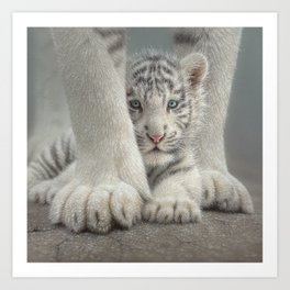 White Tiger Cub - Sheltered Art Print