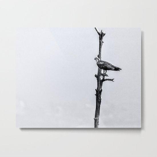 Lonely Perch Metal Print