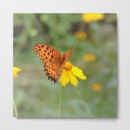 Ms. Indian Fritillary at West Lake Metal Print