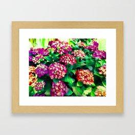 Garden Hydrangea - Raspberry Pink and Lavender Framed Art Print