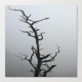 Scraggly Tree Canvas Print