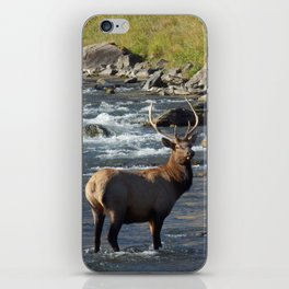 Yellowstone Bull Elk iPhone Skin