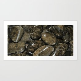 Fossilized Coral Art Print