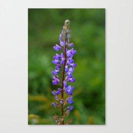violet flower Canvas Print