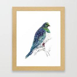 Mr Kereru, New Zealand native wood pigeon Framed Art Print