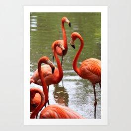 Flamingo Tango Art Print