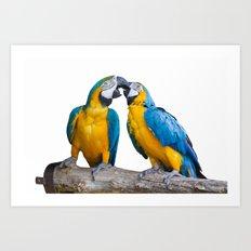 isolated ara ararauna parrot Art Print