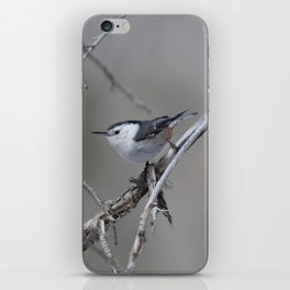 White-breasted Nuthatch iPhone Skin