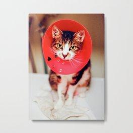 Cone Cat Metal Print