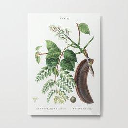 Kentucky coffeetree (Gymnocladus canadensis) from Traité des Arbres et Arbustes que l'on cultive en Metal Print
