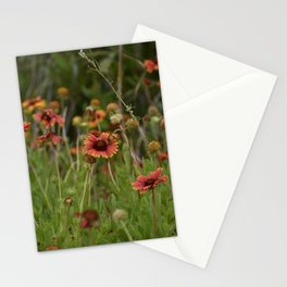 Indian Blanket Flowers Stationery Cards