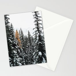 353. Autumn Pine in Snow Forest, Banff, Canada Stationery Cards