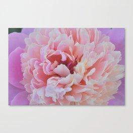 Raspberry Sorbet Canvas Print