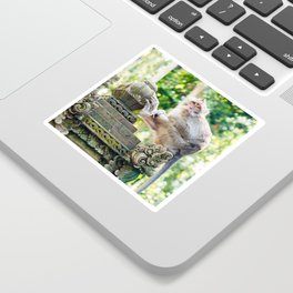 Monkey Forest | Nature Animal Photography in Bali Indonesia Sticker