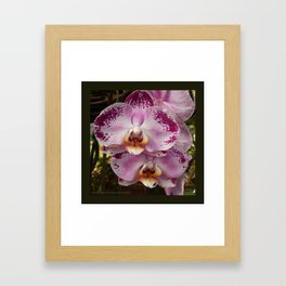 Pink Orchid Blossom from Mexico Framed Art Print