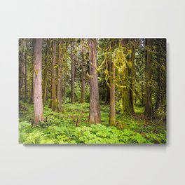 Mossy Old Trees Metal Print