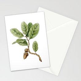 Live Oak Stationery Cards