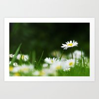 daisies Art Prints featuring Daisies by Nathalie Photos