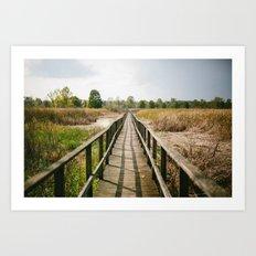 Sunny Summer Walk // Ohio Art Print