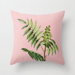 Vintage Staghorn Sumac Botanical Illustration on Pink Throw Pillow