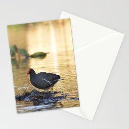 Birds from Pantanal Frango dagua Stationery Cards