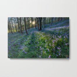 Bluebell sunset at Margam woods Metal Print
