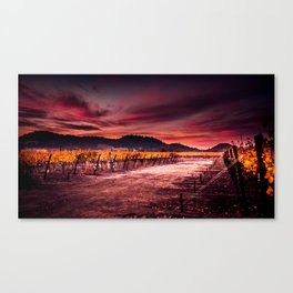 Ripe and Full (Napa Valley; California) Canvas Print