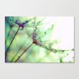 Wish With All Your Heart Canvas Print
