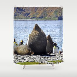 Fur Seal Resting Shower Curtain