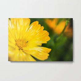 Macro Yellow Flower Metal Print