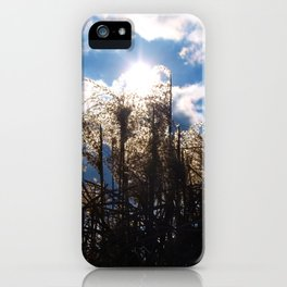 Pampas grass in the sunshine. iPhone Case