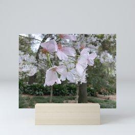 Spring - Cherry garden Mini Art Print