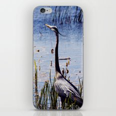 Great Blue Heron In The Florida Wetlands iPhone & iPod Skin