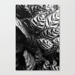 The Black & White Peacock Canvas Print