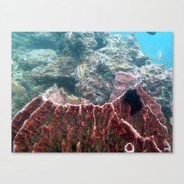 Barrel Sponge Canvas Print