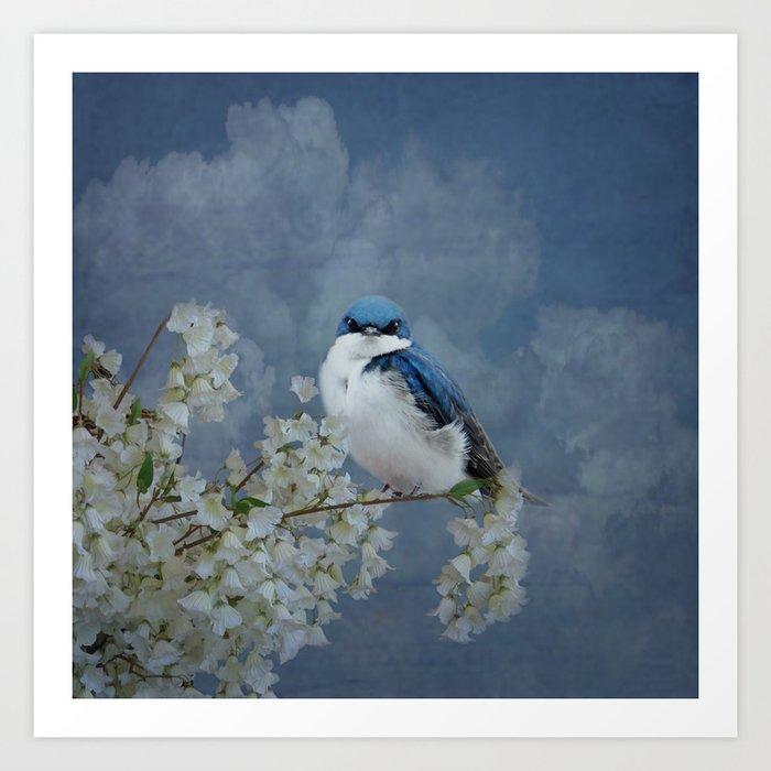 Tree Swallow Art Print