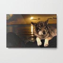 Dog German Shepherd and Sunset Metal Print