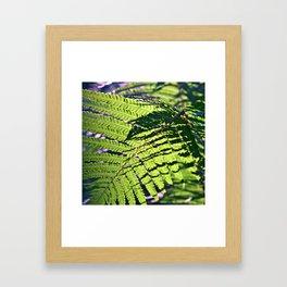 Green Fern in Sunny Dreams Framed Art Print