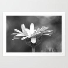 black and white flower petals Art Print