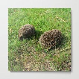 two little babies at play green grass hedgehog Metal Print