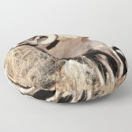A bighorn sheep in Colorado National Monument Floor Pillow