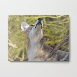Things are Looking Up! Metal Print